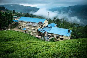 The Gorkha Tea Factory