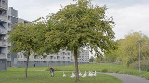 Feather Collecting, Kapitalweg, Breda #1 (video still)