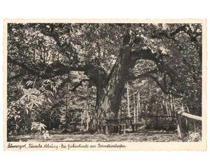 Lost linden tree