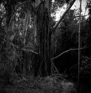 Elijo el bosque porque siempre esconde otra cosa.
