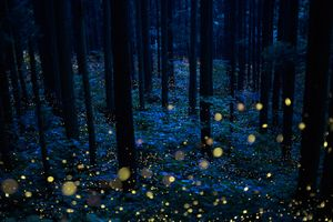 Summer fairies' forest