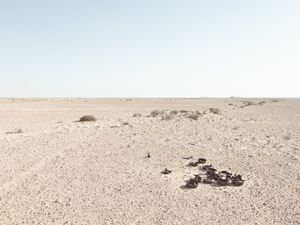 Line of defensive positions in minefield, Bir Hacheim Battlefield, Libya | © Matthew Arnold Photography
