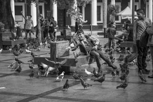 Pigeon catcher