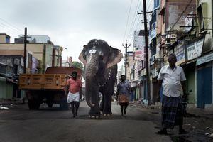 Elephant in Madurai