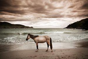 Cavalo Praia Brava © Brian Hodges, United States