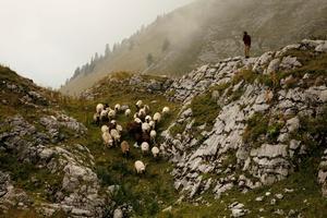 Berger avec son troupeau, Balachaux
