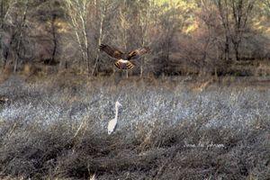Hunt and hunter