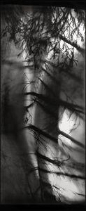 © Stig Marlon Weston