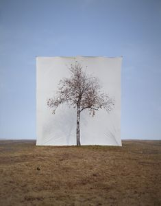 Tree #1, from the series Photography-Act © 2007 Myoung Ho Lee