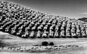 10_Spagna_Andalusia–settembre 1995