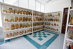 """A """"reference room"""" filled with jars of deformed, stillborn fetuses is viewable for people visiting the hospital."""