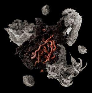 Worms Make Soil
