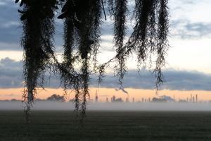 Battlefield Oak, St. Bernard Parish, Louisiana