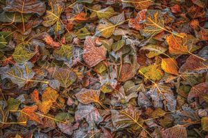 Backyard Fall Leaves