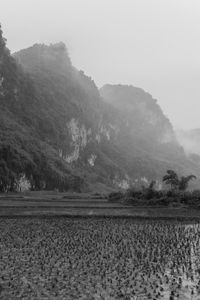 Empty Rice Field and Mountain