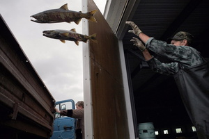 Loading of fish