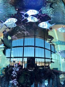 Aquarium and Reflection, Tampa Airport, Florida