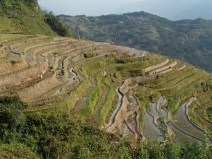 Rice terraces workers