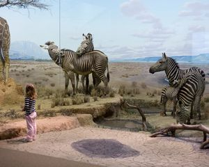 Zebras; Carnegie Museum of Natural History, Pittsburgh