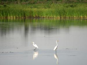 Kansas Wetlands-Daily Journeys-5