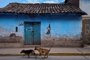 Street dogs, Calca, Peru