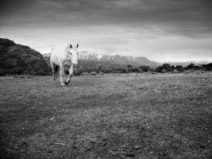 Cabalgando por la Patagonia.