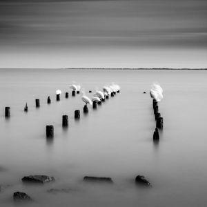 17 Pelicans
