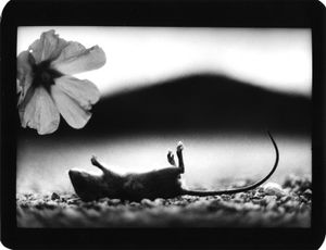 """""""Untitled"""" (Mouse and Flower), 2007 © Giacomo Brunelli"""