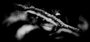 Deep dark forest 6