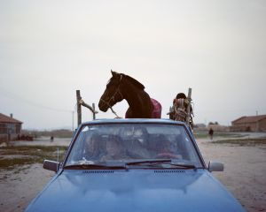 A horse on the Pickup, 2010