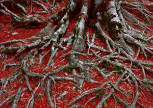 The roots in a red