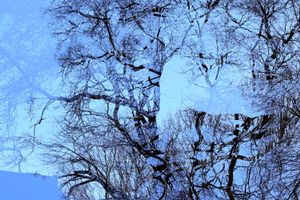 what about the winter, no leaves noly naked trees