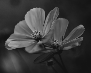 Mono Flower 5