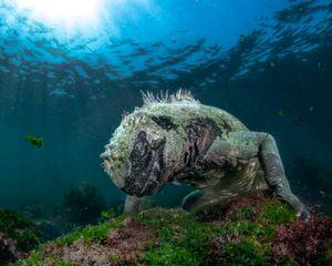 SeaWater Dragon