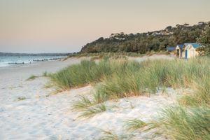 McCrae Beach Grass
