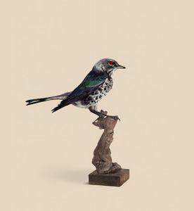 SPARROW [Passeridae megapixelianae] Bird with high visual acuity