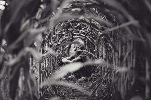 hide in a cornfield