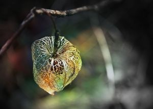 Fairy Cages
