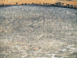 """Saltwater affected dam, Wagin, Western Australia, Australia. Rising saltwater table from surrounding wheat farms killed the forest and freshwater dam, from the series """"Abstract Earth"""" © Richard Woldendorp"""