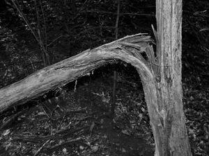 Inner Forest IX