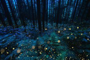 Rich deep forest