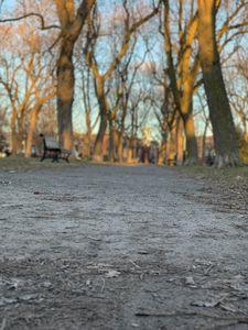 A park in late afternoon