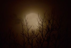 Foggy Moonrise