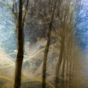 Echoes of oak order