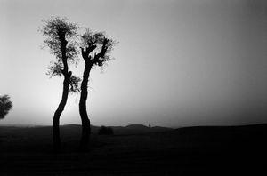 Inhabited Deserts - UAE