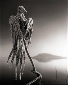 Petrified Dove © Nick Brandt. Courtesy of Edwynn Houk Gallery, New York