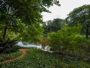 Woodland Pond View
