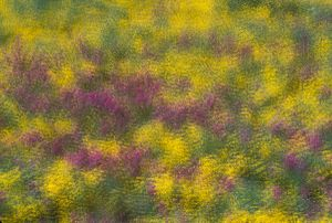 Field of Flowers, a Multiple