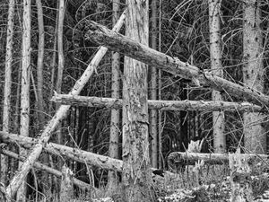 Wounded Woods 11