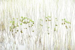 Inspirational Marsh